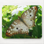 Butterfly on Jasmine Tropical Nature Photography Mouse Pad
