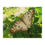 Butterfly on Jasmine Tropical Nature Photography Wood Wall Art