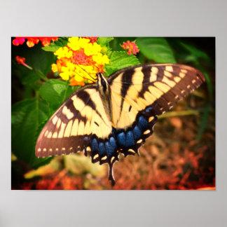 Butterfly On Lantana Poster
