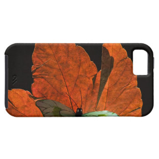 Butterfly on leaf 2 iPhone SE/5/5s case