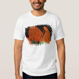 Butterfly on leaf 2 tee shirt
