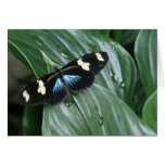Butterfly on Leaf Cards