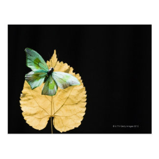 Butterfly on leaf postcard