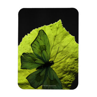 Butterfly on leaf rectangular photo magnet