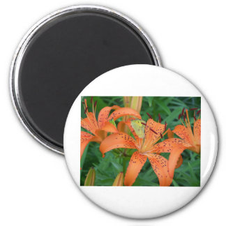 Butterfly on Lilly Magnet