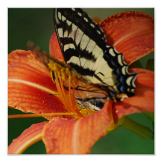 Butterfly on Lily Poster