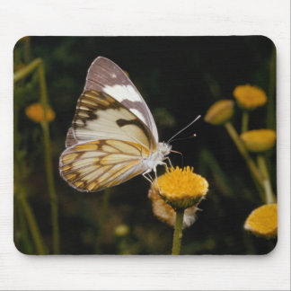 Butterfly on Marigold Mouse Pad