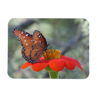 Butterfly on Mexican Sunflower Magnet
