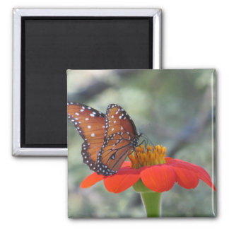 Butterfly on Mexican Sunflower 2 Inch Square Magnet