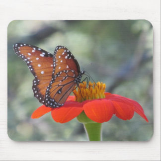 Butterfly on Mexican Sunflower Mousepad
