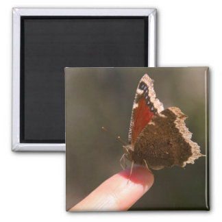 Butterfly On My Finger Refrigerator Magnets