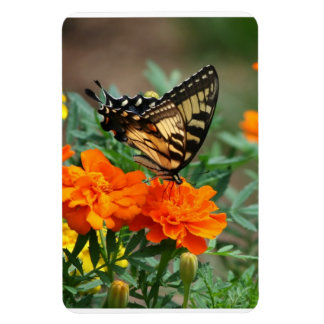 Butterfly on Orange and Yellow Flowers Premium Magnet