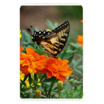 Butterfly on Orange and Yellow Flowers Premium Rectangular Photo Magnet