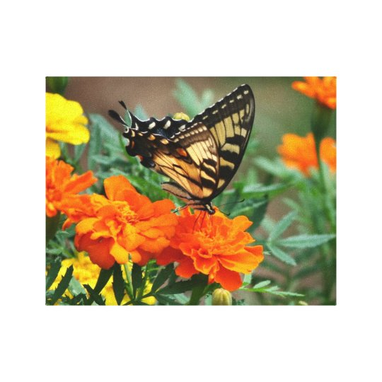 Butterfly on Orange and Yellow Flowers Stretched Canvas Print