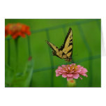 Butterfly On Pink Zinnia Notecard Greeting Card