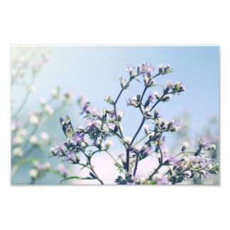 Butterfly on purple blossom branch photo print