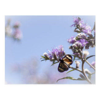 Butterfly on purple blossom branch postcard