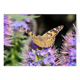 Butterfly on Purple Echnia Card