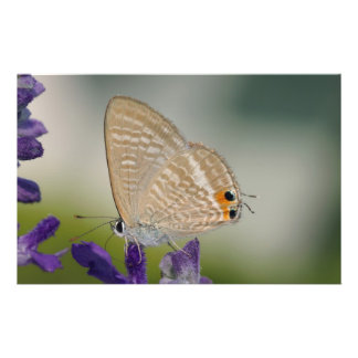 Butterfly on Purple Flower Full Color Flyer
