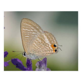 Butterfly on Purple Flower Flyers