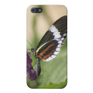 Butterfly On Purple Side iPhone 5 Cover