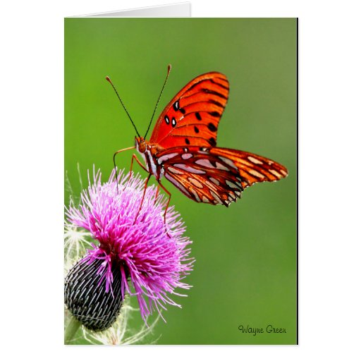 Butterfly on Purple Thistle Card