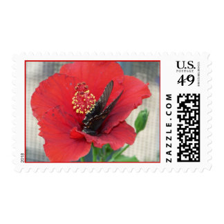 butterfly on red flower postage