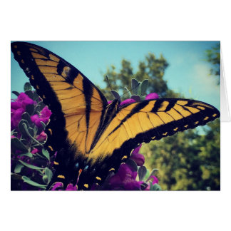 Butterfly on Sage Blank Greeting Card