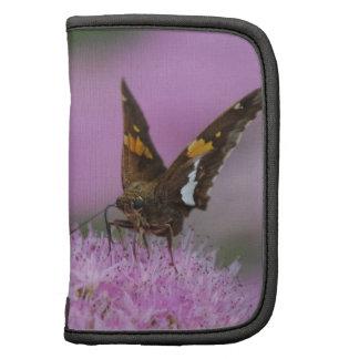 Butterfly on Sedum Folio Planner