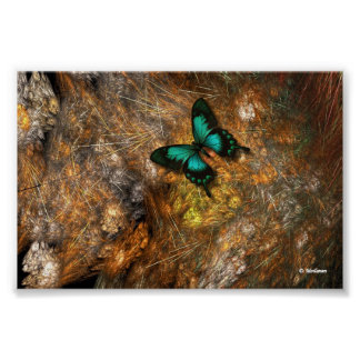 Butterfly On The Cactus Poster