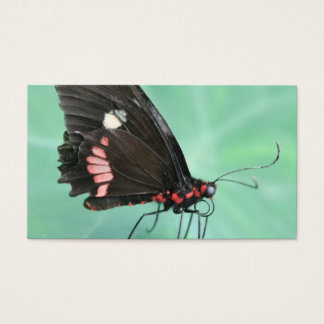 Butterfly on the Edge of a Leaf. Business Card
