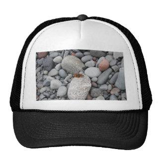 Butterfly on the rocks trucker hat