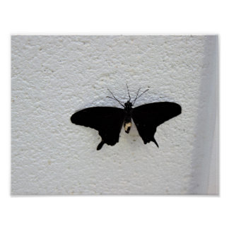 Butterfly on the Wall Poster