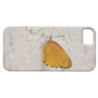 Butterfly on wall, Gauteng Province, South iPhone SE/5/5s Case