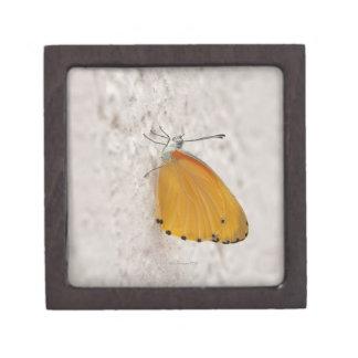 Butterfly on wall, Gauteng Province, South Keepsake Box