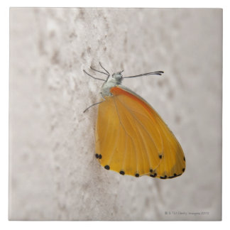 Butterfly on wall, Gauteng Province, South Tile