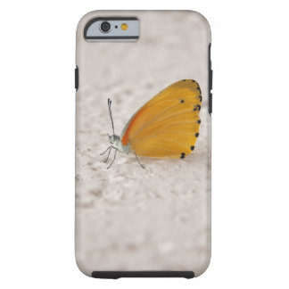 Butterfly on wall, Gauteng Province, South Tough iPhone 6 Case