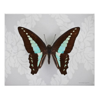 Butterfly on wallpaper background poster