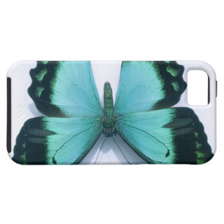 Butterfly on white iPhone SE/5/5s case