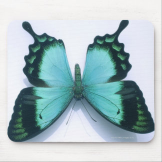 Butterfly on white mouse pad