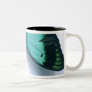 Butterfly on white mugs