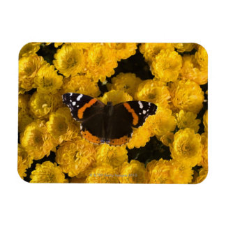 Butterfly on yellow asters rectangular photo magnet