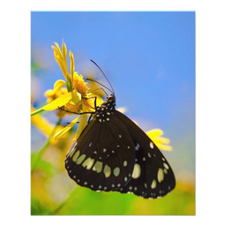 Butterfly on Yellow Flower Flyer Design