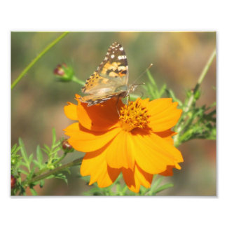 Butterfly on Yellow Flower Photo Print