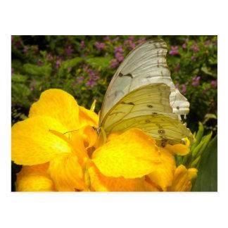 Butterfly on yellow flower postcard