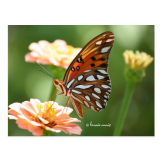 Butterfly on Zinnia Postcard