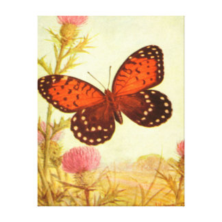 Butterfly - Orange - Black Stretched Canvas Prints
