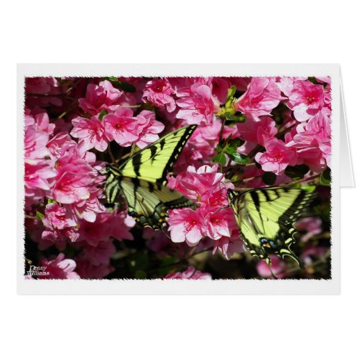 Butterfly Pair Greeting Card