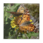 Butterfly Pair Tiles