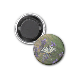 Butterfly - Papilio machaon on flowering lavender 1 Inch Round Magnet